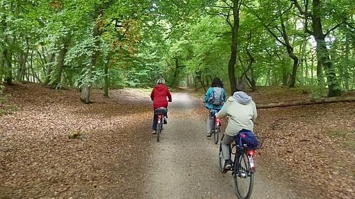 Fahrrad, Kutsche, Darßbahn